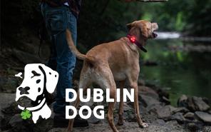Dublin Dog